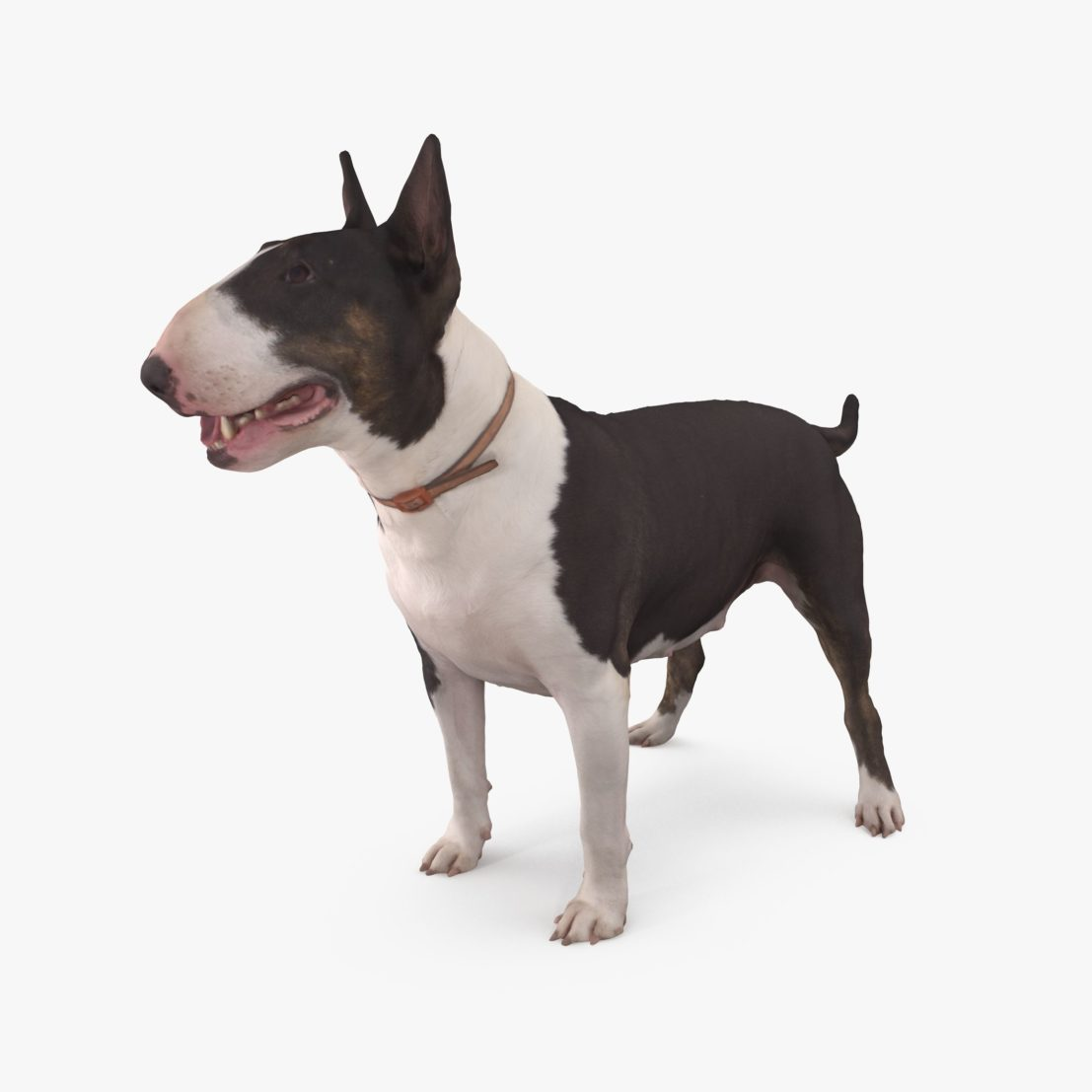 Bull Terrier Dog 3D Model | 3DTree Scanning Studio