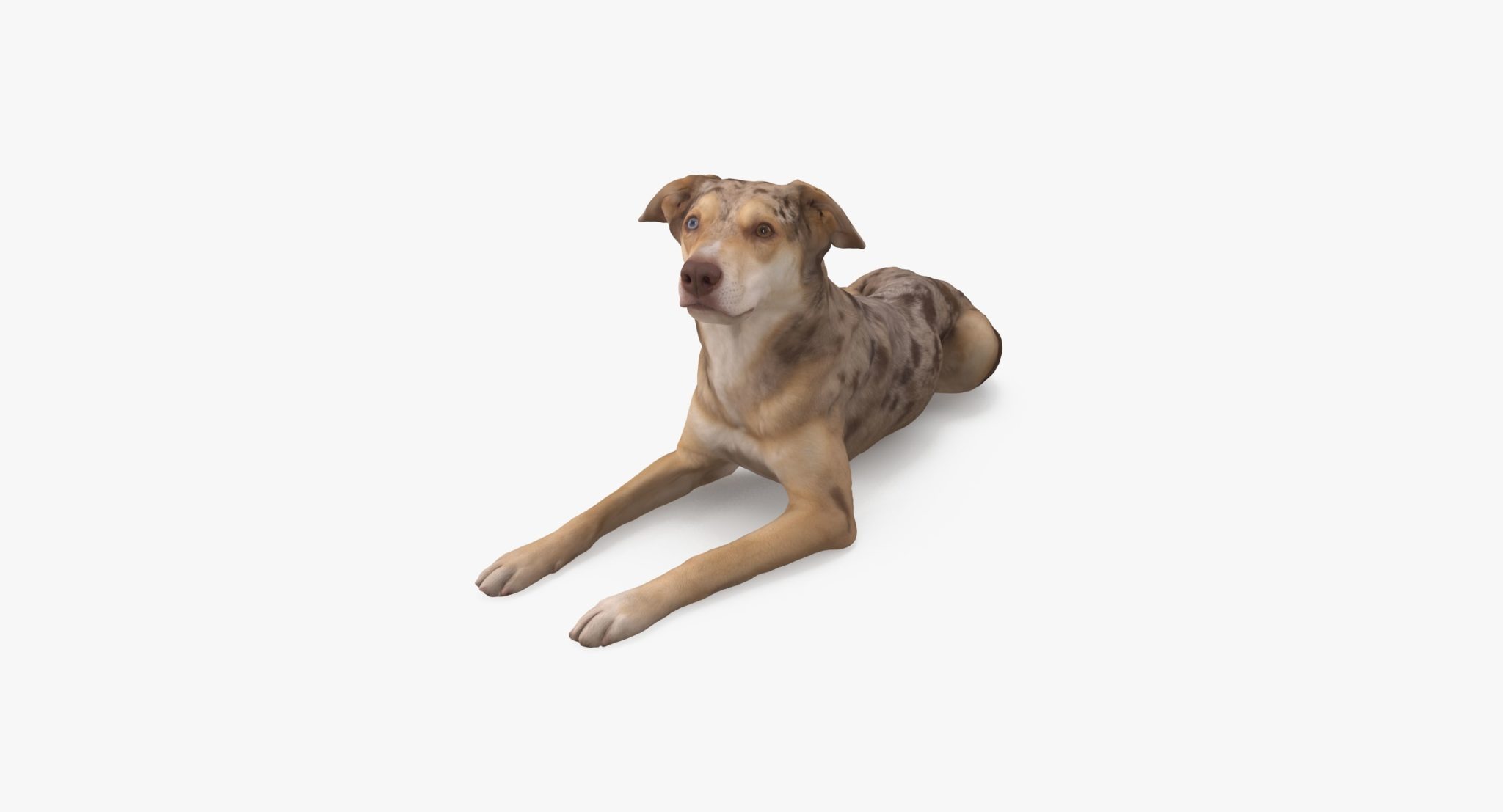 Metis Lying Dog 3D Model | 3DTree Scanning Studio