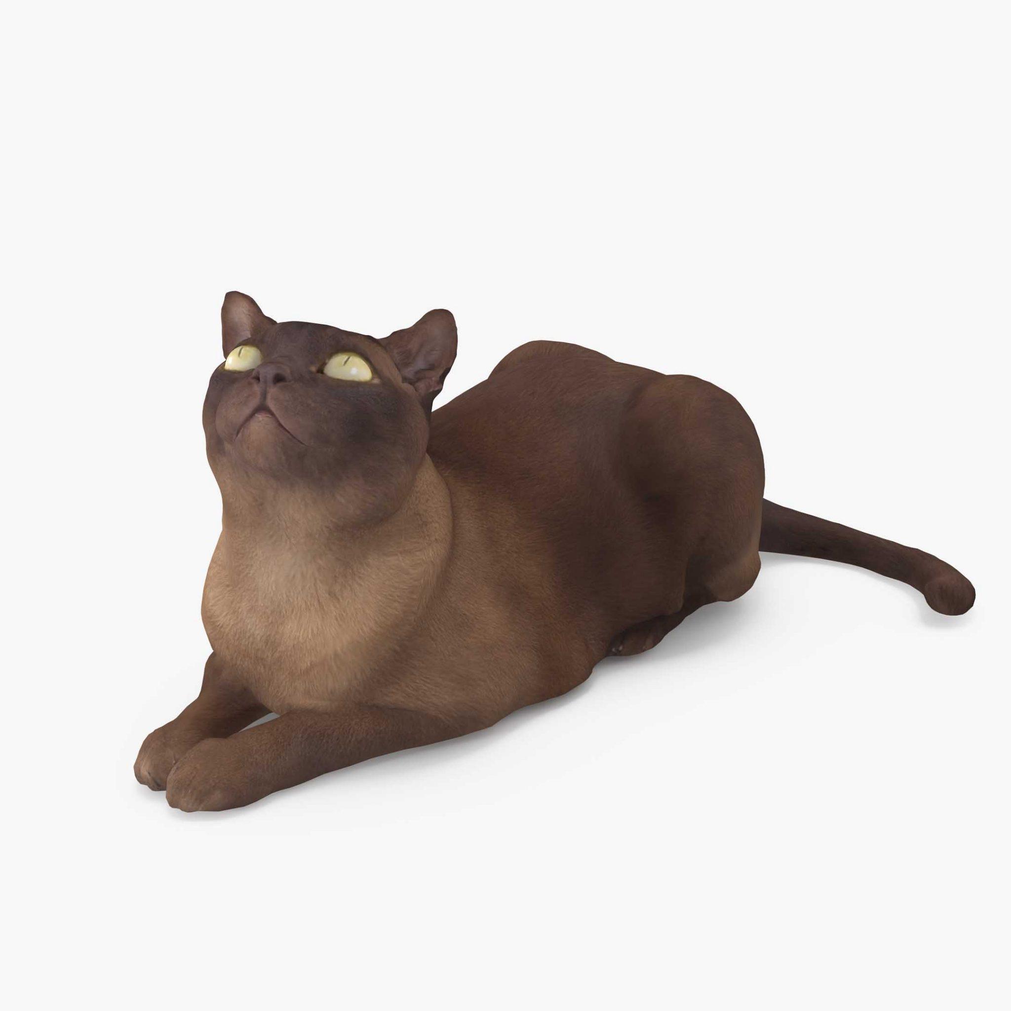 Cat Abyssinian Lying 3D Model | 3DTree Scanning Studio