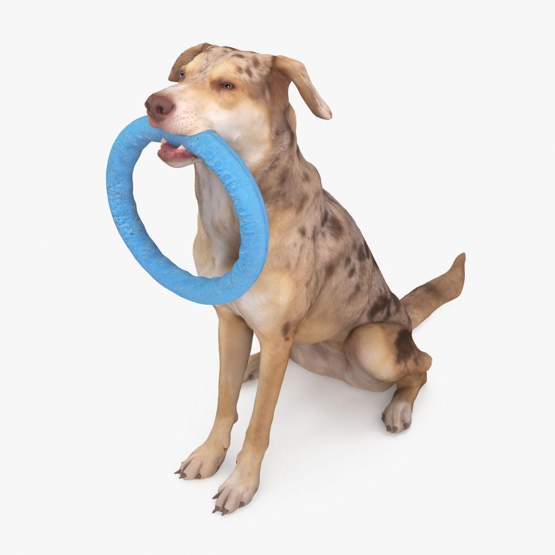 Metis Sitting Dog 3D Model | 3DTree Scanning Studio