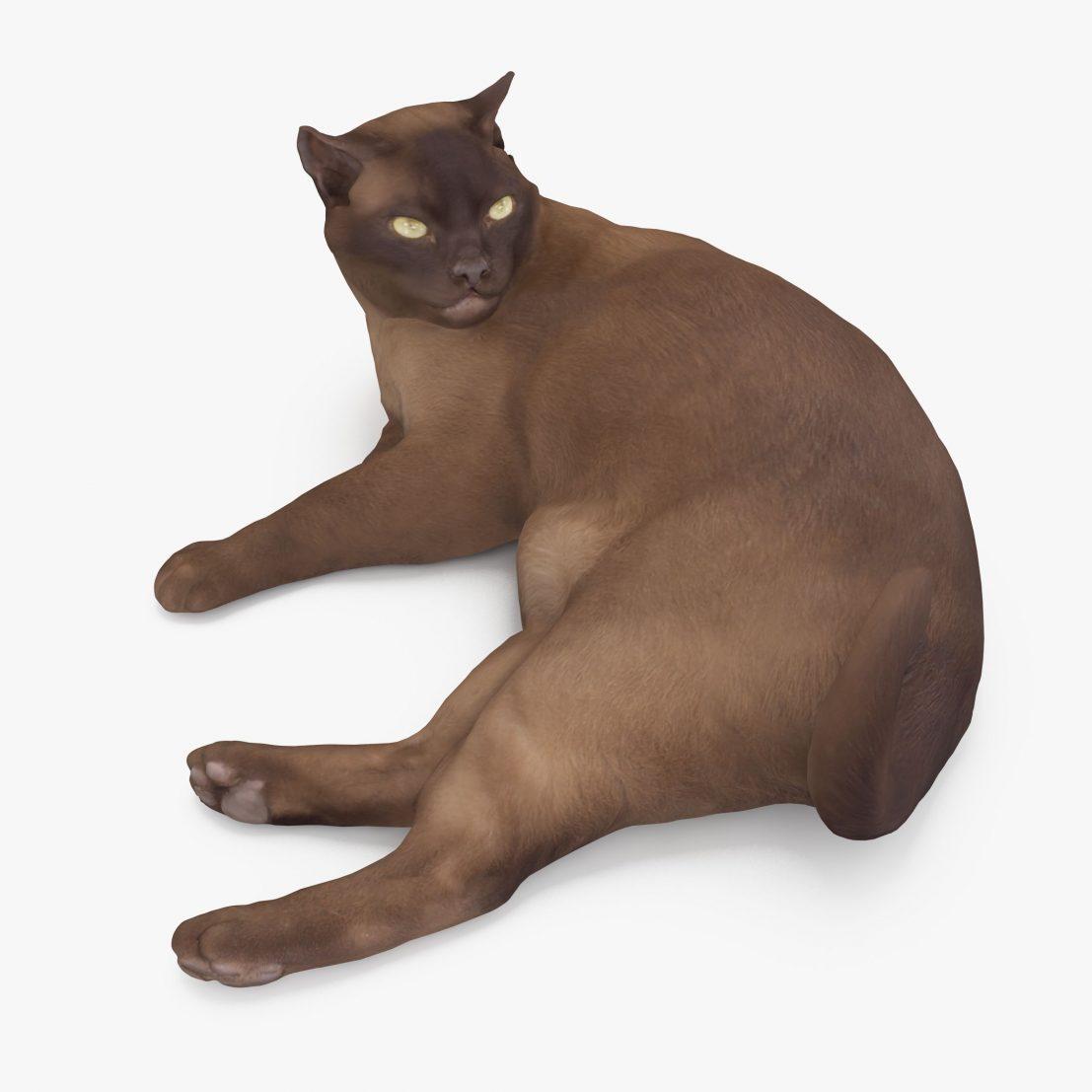 Abyssinian Cat Lying 3D Model | 3DTree Scanning Studio