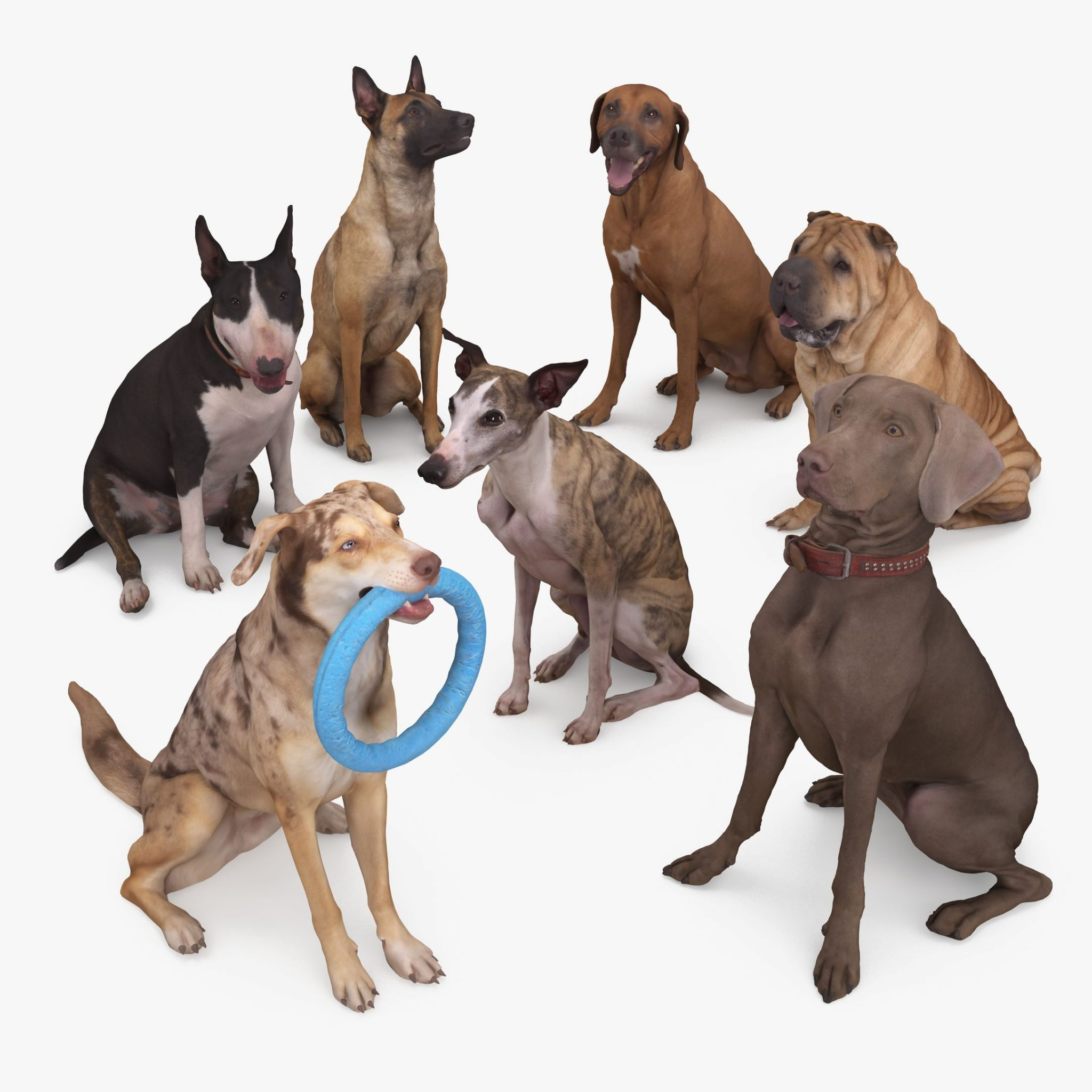 Sitting Dog Collection x7 3D Models | 3DTree Scanning Studio