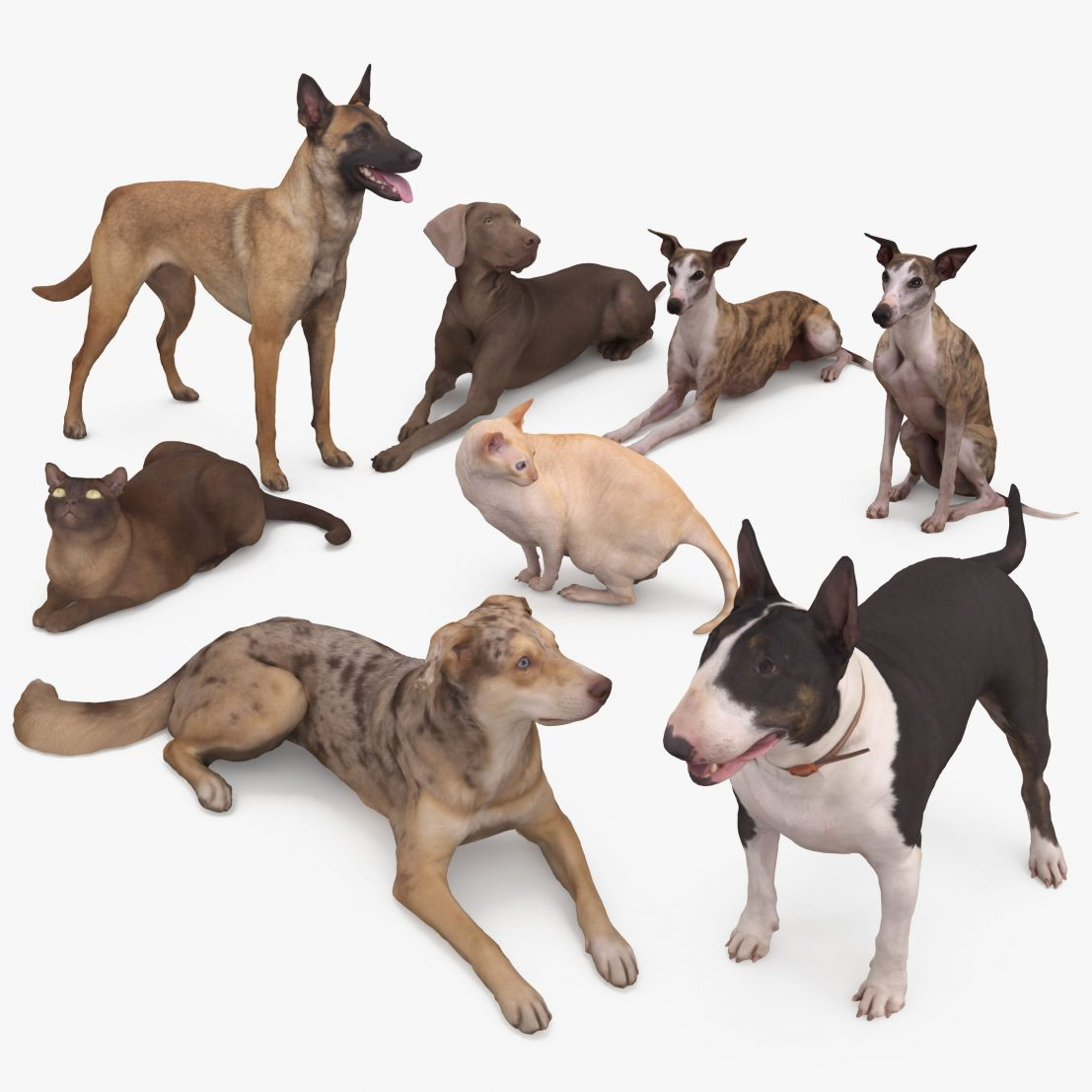 Pets Collection x8 3D Models | 3DTree Scanning Studio