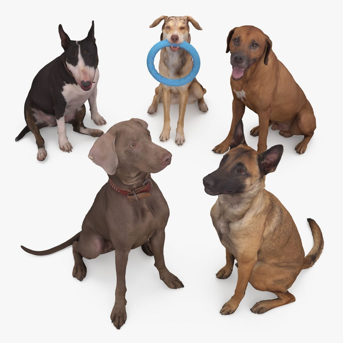 Sitting Dog Collection x5 3D Models | 3DTree Scanning Studio